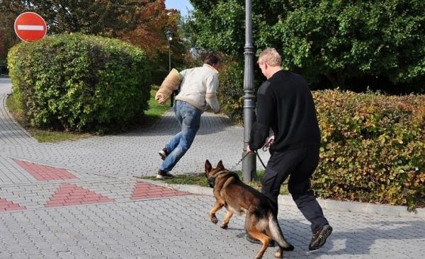 Fyzická ostraha se psem - psovod